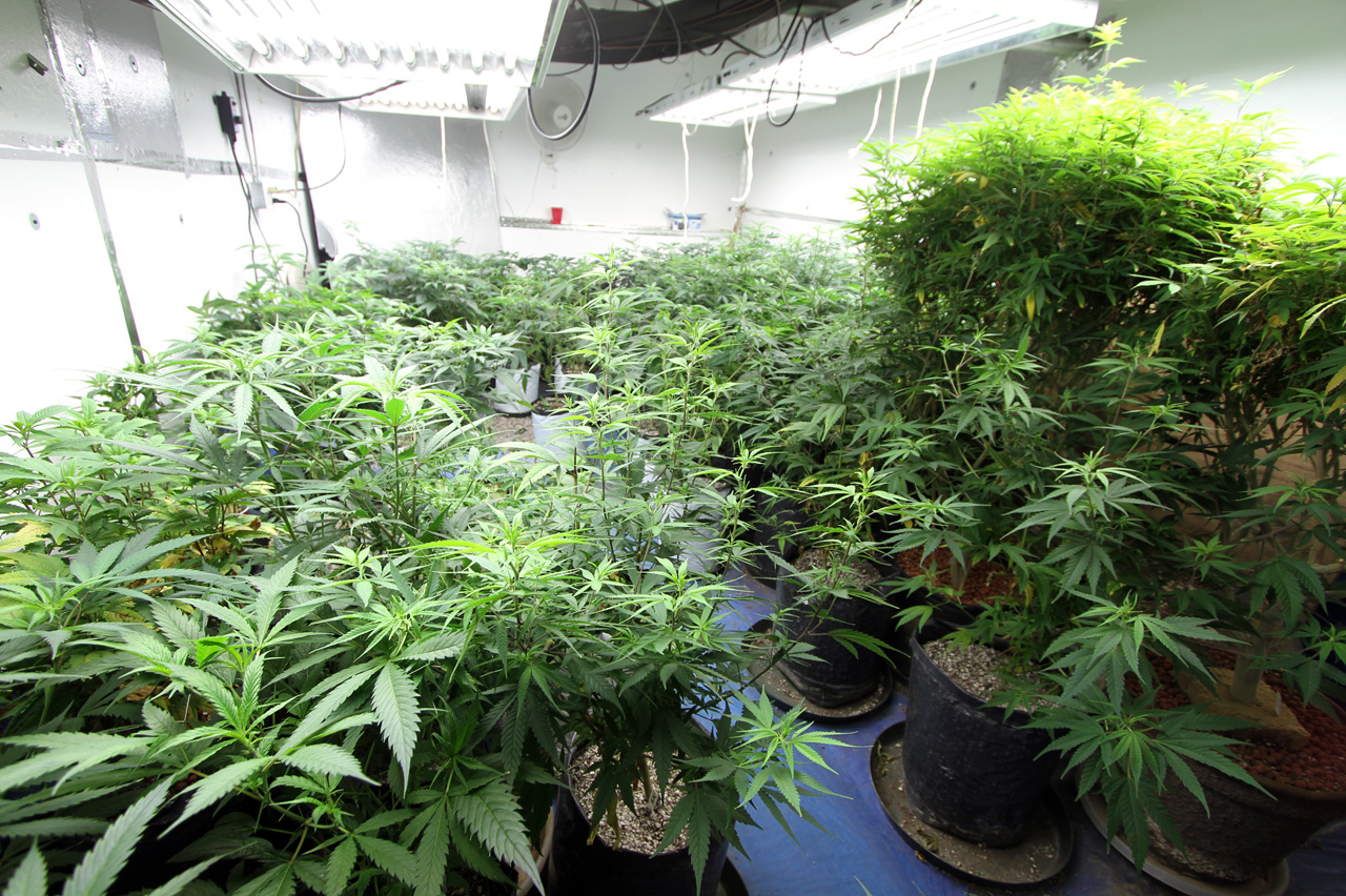 marijuana-hyrdorponic-utilities-power